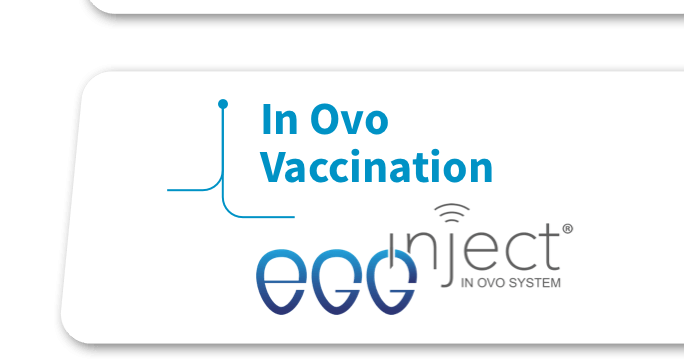 In ovo Vaccination